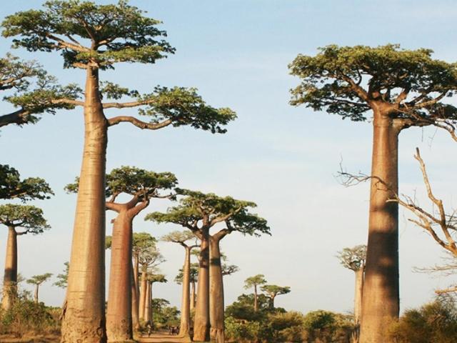 LE CIRCUIT OUEST DE MADAGASCAR